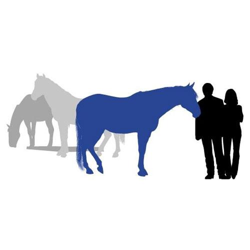 Equine Experiential Education Association Ogranizational