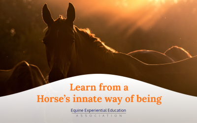 What We Can Learn from a Horse's Innate Way of Being